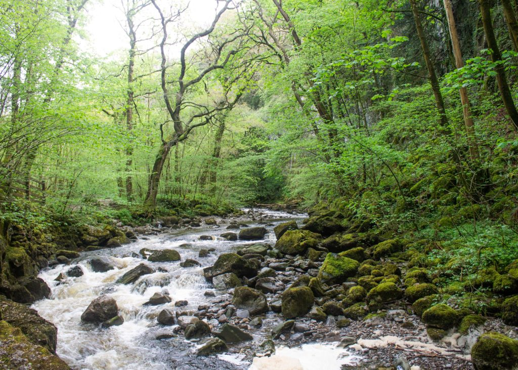 The River Twiss bubbling over moss covered boulders through the Swilla Glen.
